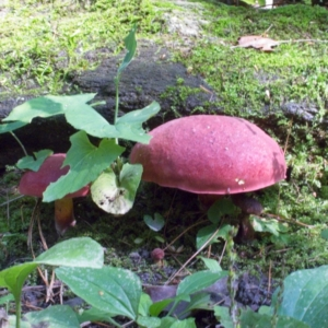 On top, toadstools are pretty. Below ground they run a communications network for trees