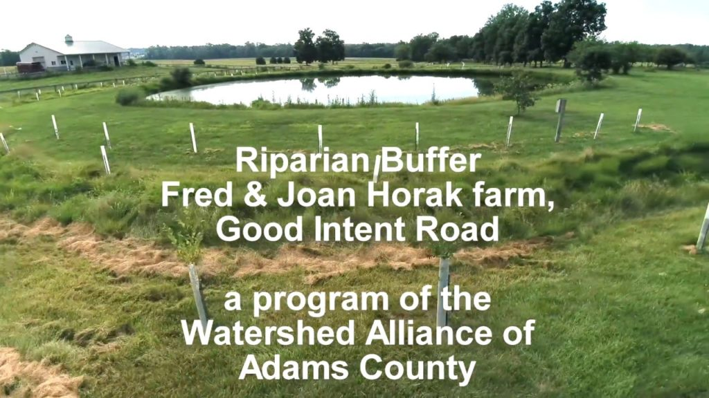 Riparian buffer of assorted trees planted to help filter runoff into stream from area fields.