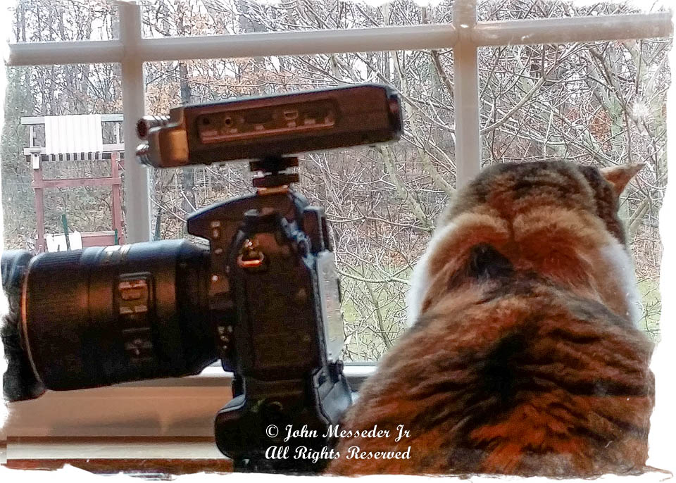 Daisy the Calico cat, beside a camera, watching the back year.