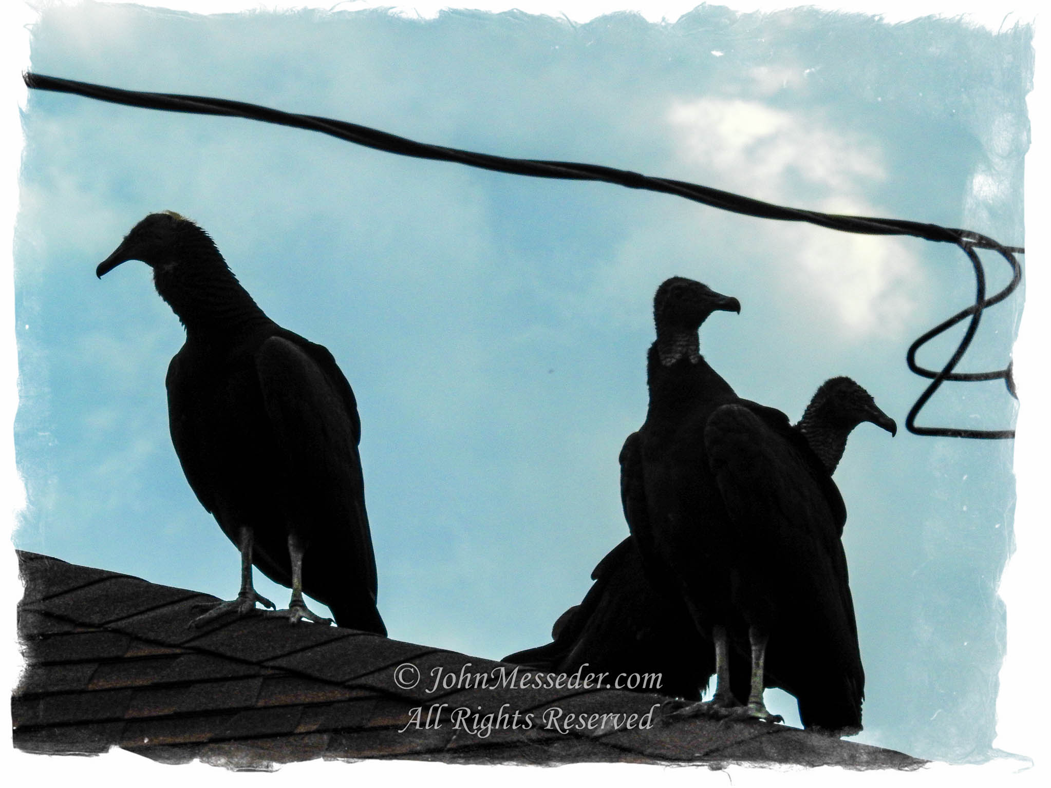 Black vultures silhouetted on the roof