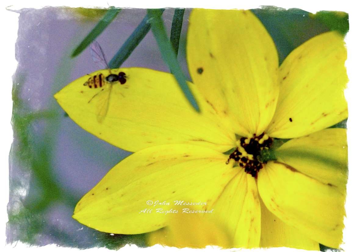 The tiny bee is probably a columnist, pollinating the garden's discussion.