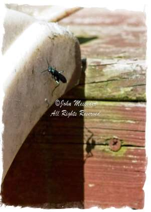 A Spider wasp casts a ferocious shadow.