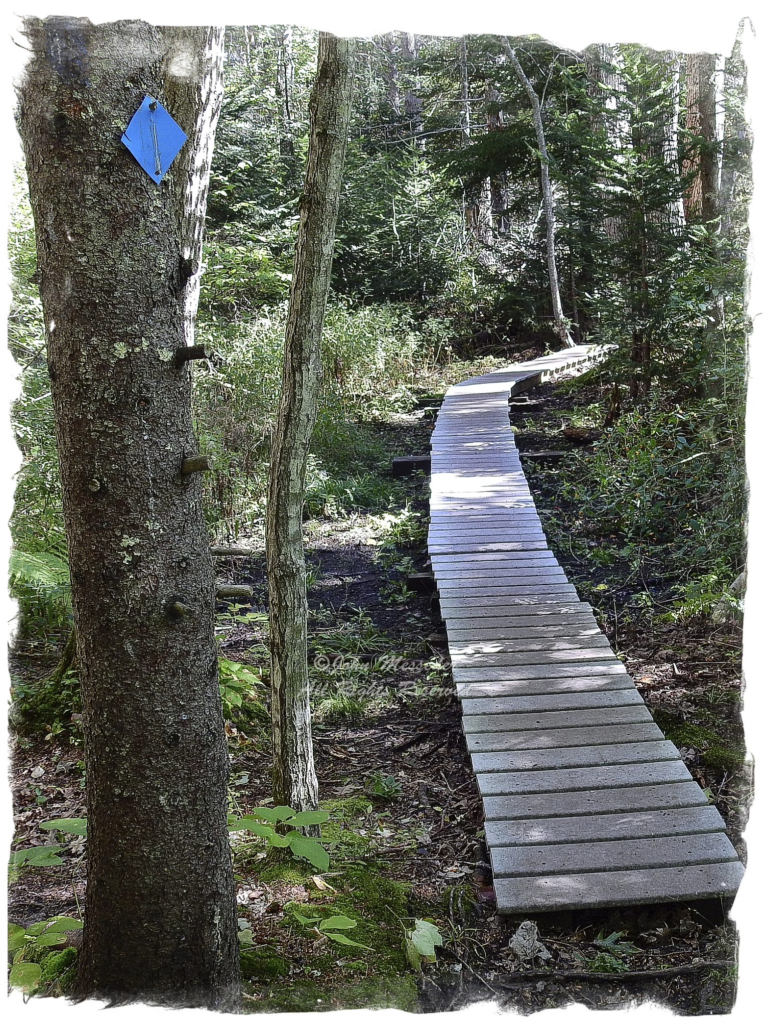 A section of boardwalk carries hikers across a wetland on a public trail across private land.