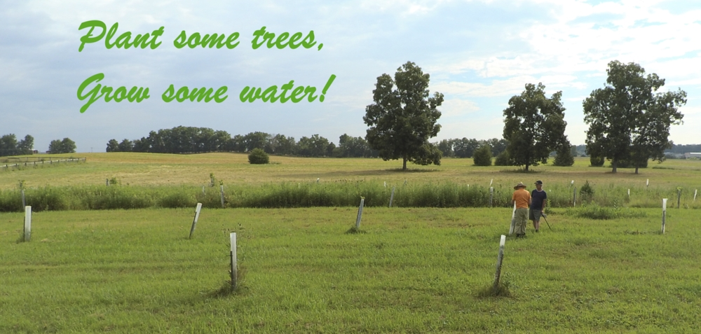 Trees are natural jungle gyms and water treatment plants.