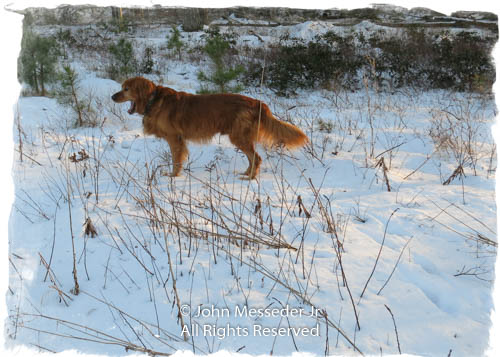 An old friend barks defiance at winters passed and future.