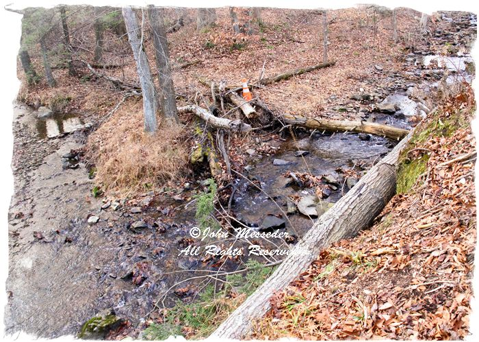Middle (left) and Swamp creeks surroundng Strawberry Hill Nature Preserve, are designated Exceptonal Value creeks.
