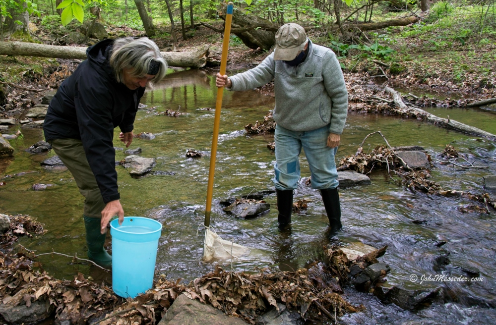 Members of the Watershed Alliance of Adams County collect macroinvertebrates from Swamp Creek.