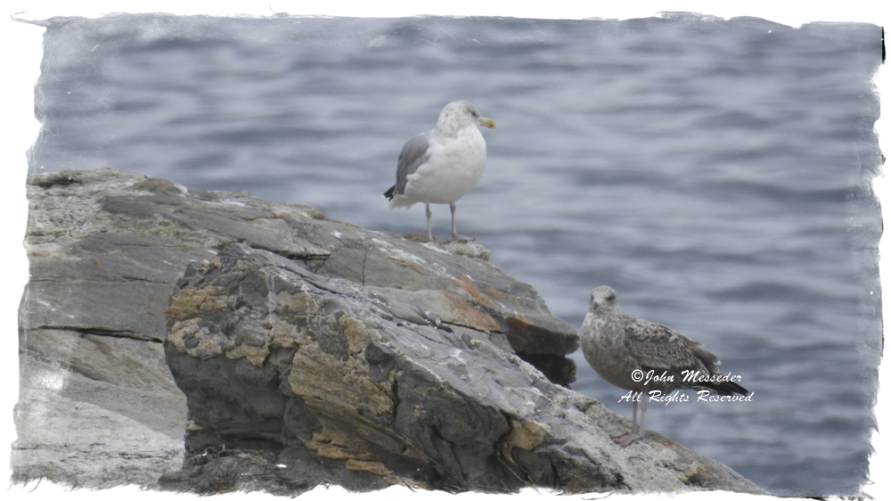 A couple of birds hanging by the sea.
